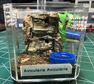 Baby Avic New Enclosure